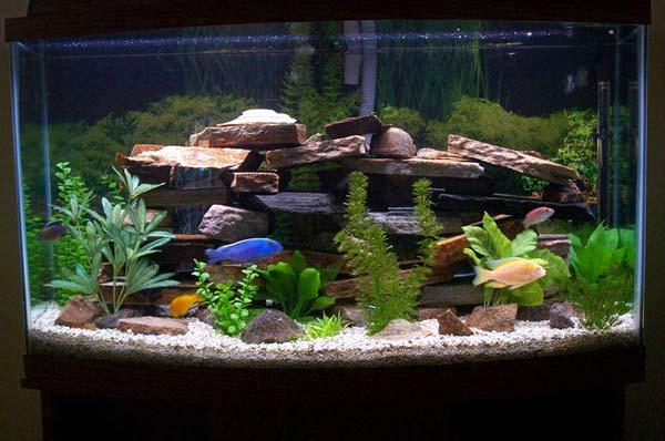 O que eu preciso para montar um aquário? Começando pelo básico Não é tão difícil montar um aquário quanto parece. Neste artigo, listaremos os componentes básicos para você começar. 1 […]