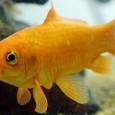 De acordo com o site do jornal britânicoThe Daily Telegraph,peixes de sexo oposto conseguem se comunicar por meio de sons específicos para alertar os demais sobre perigos existentes, além de […]